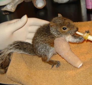 Helping Orphaned Wildlife