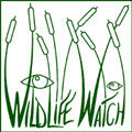 Wildlife Watch