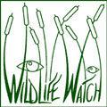 Wildlife Watch