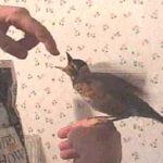 Feeding Baby Birds