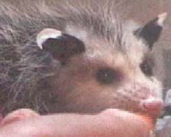 Feeding Small Mammals